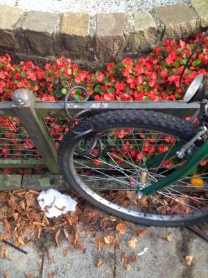 柵にくくりつけた自転車