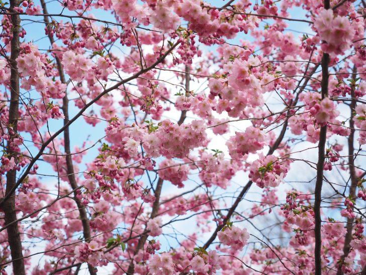 flowers-1174159_1920