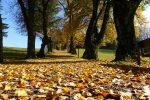 ドイツの秋の訪れ:秋の味覚とドイツ人の秋のファッション事情